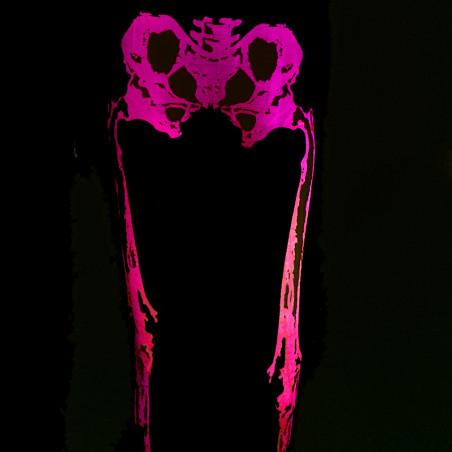 Legging Fluo Squelette